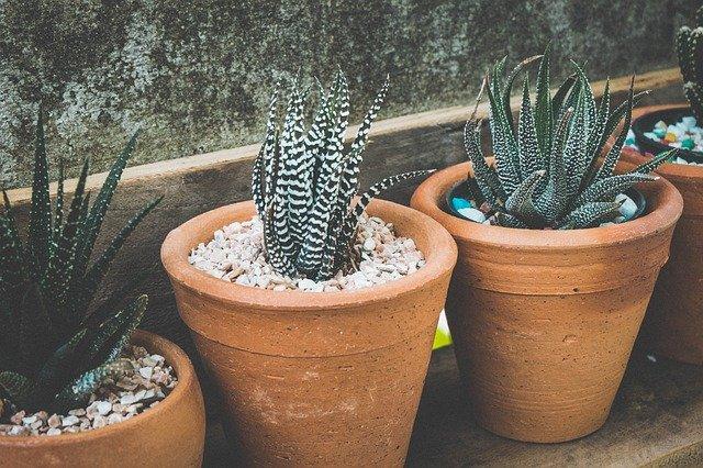 3つの多肉植物